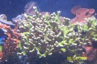 Name: thumb-100_3231.jpg