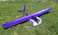 Name: purple deadbeat.jpg