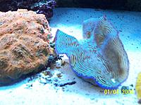 Name: bluffreef 003.jpg