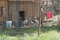 Name: Compressed_0055.jpg