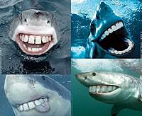 Name: happysharks.jpg