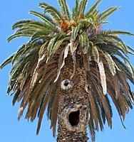 Name: sideshowbob tree.jpg