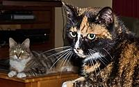 Name: cats on tables (1 of 1) (609x381).jpg