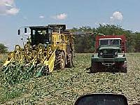 Name: cornpicker.jpg