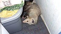 Name: Bella in her fave rest spot.jpg Views: 21 Size: 498.3 KB Description: Ahhh, rest.... .