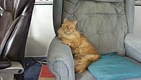Name: mumbles classic.jpg