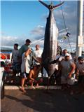 Name: 600lb marlin 2.jpg