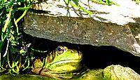 Name: frog1000.jpg