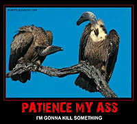 Name: vultures-patience-my-ass.jpg Views: 4 Size: 46.9 KB Description: