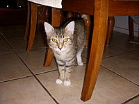 Name: DSCN1449.jpg