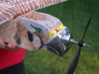 Name: EPP-PeregrineFalcon-4058.jpg