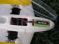 Name: Weasel-3153.jpg