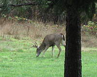 Name: fall09a 022.jpg