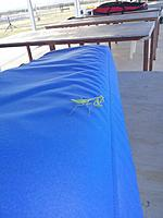 Name: Praying Mantis.jpg