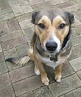 Name: dog.jpg Views: 10 Size: 108.8 KB Description: pursuit beast