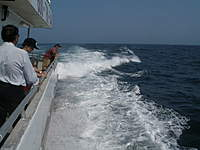 Name: P6200189.jpg