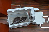 Name: DSC_0249.jpg