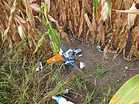 Name: EF-16 Crash 9-19-10 004S.jpg