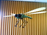 Name: Dragfly.jpg