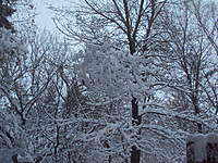 Name: DSC00483.jpg