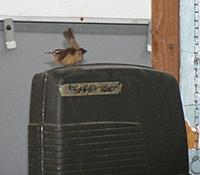 Name: dyws20111023.jpg