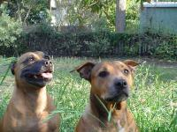 Name: DSC03118.jpg