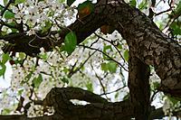 Name: 58540003.jpg Views: 29 Size: 218.7 KB Description: White petals everywhere!