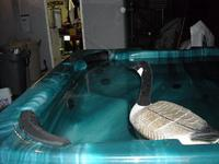 Name: Gooose 009.jpg