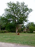 Name: land1.jpg
