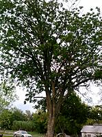 Name: land3.jpg