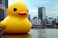Name: giant rubber duck.jpg