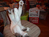 Name: P1000354.jpg