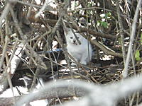 Name: IMGP0608.jpg