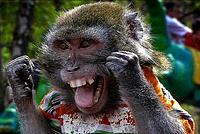 Name: monkey.jpg