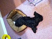 Name: IMG_0149.jpg