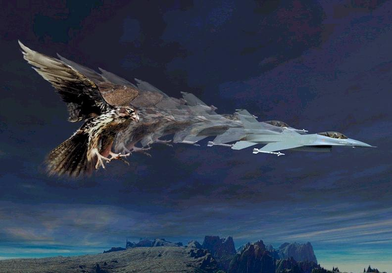 Name: falcon.jpg Views: 1,521 Size: 45.5 KB Description: