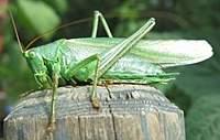 Name: Green.jpg Views: 69 Size: 21.8 KB Description: Green