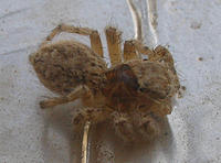 Name: spider1.jpg