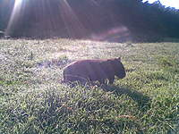 Name: 26032010.jpg