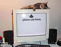 Name: kitty meeting.jpg