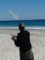 Name: BEACH SWIFT.jpg