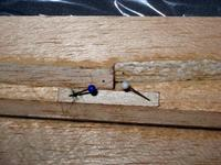 Name: img_0007-s.jpg