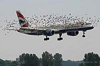 Name: Plane_With_Birds.jpg