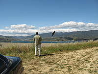 Name: wasp pic.jpg
