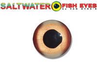 Name: glass eye.jpg