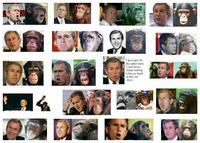 Name: Bush-monkey.jpg