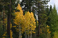 Name: IMG_7449.jpg