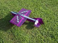 Name: Badius Fly in 09 022 (Medium).jpg