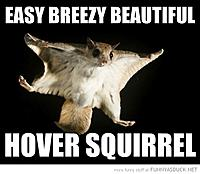 Name: funny-flying-squirrel-easy-brezzy-beautiful-hover-pics.jpg