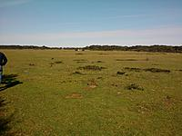 Name: Photo0316.jpg